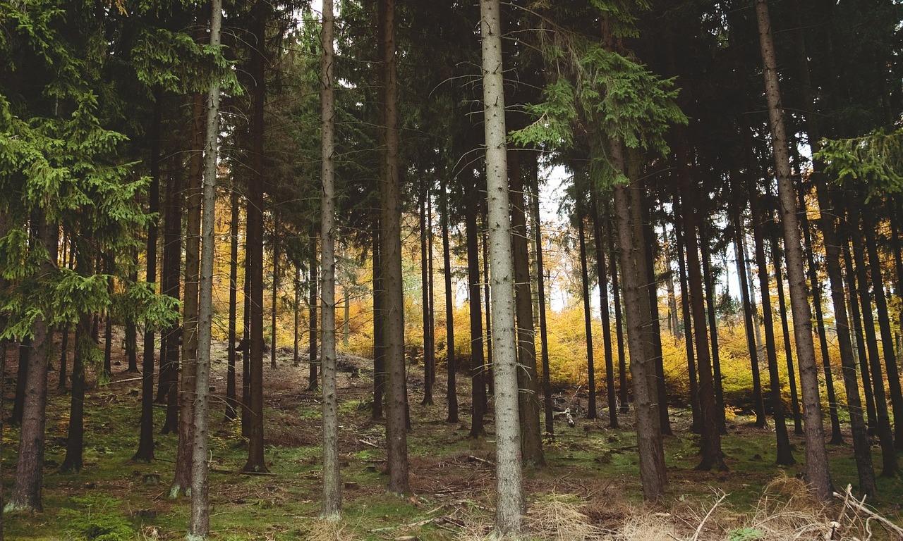 woods-843215_1280