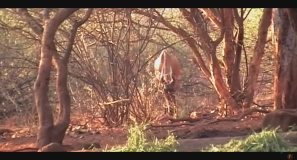 Fabula Outdoor - Bowhunting in Africa, Henri Harju